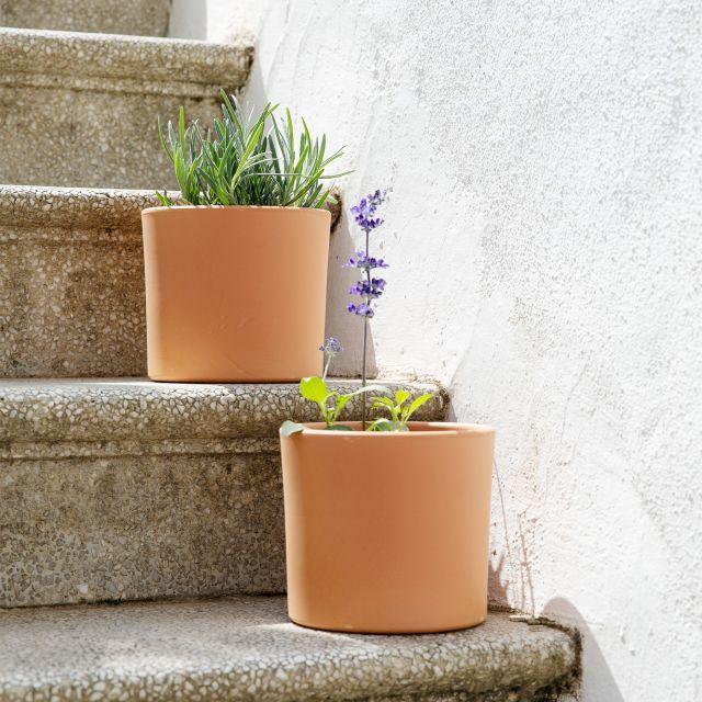 comprar online hierbas aromáticas lavanda y salvia