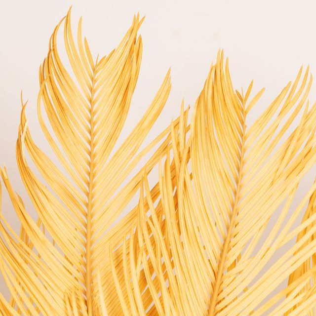 Enviar ramo flor seca hojas de palmera