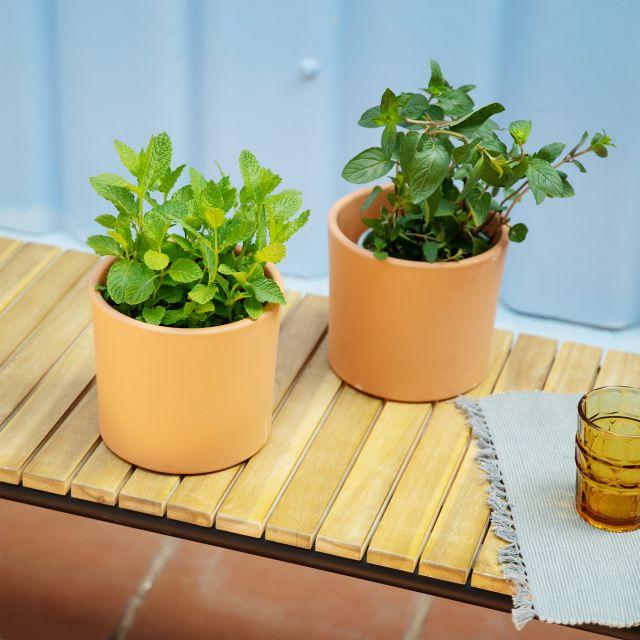 piante aromatiche The Wonderfresh Squad Colvin