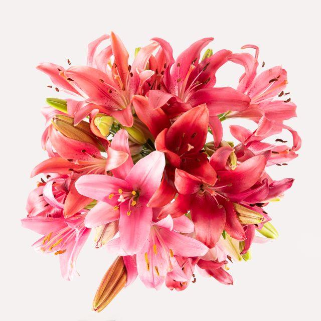 Envio online de lirios rosas e lirios vermelhos