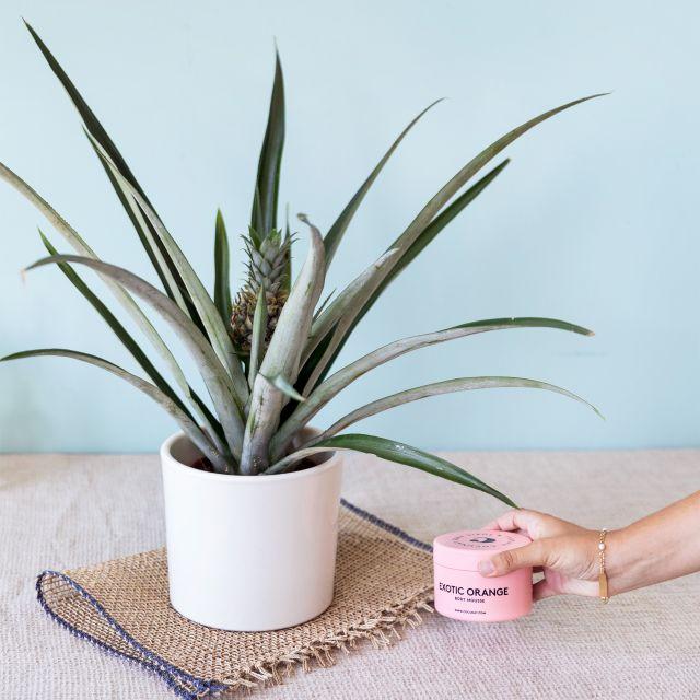 planta piña y crema corporal pack regalo