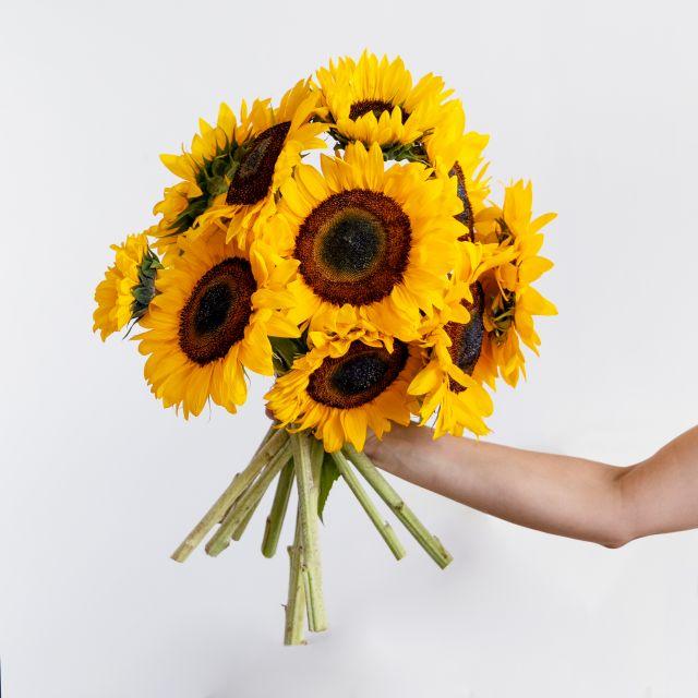 Gelbe Sonnenblumen versenden
