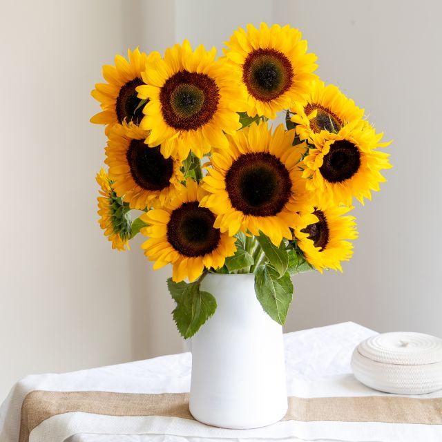 Gelbe Sonnenblumen online